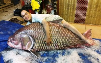 Ly kỳ loài cá giá trị mấy cây vàng