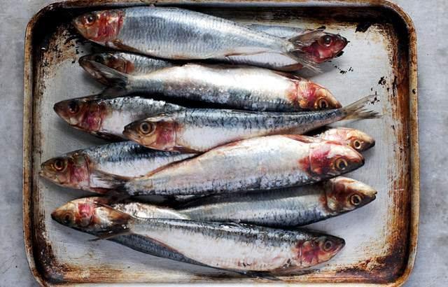Những cách chế biến cá mòi