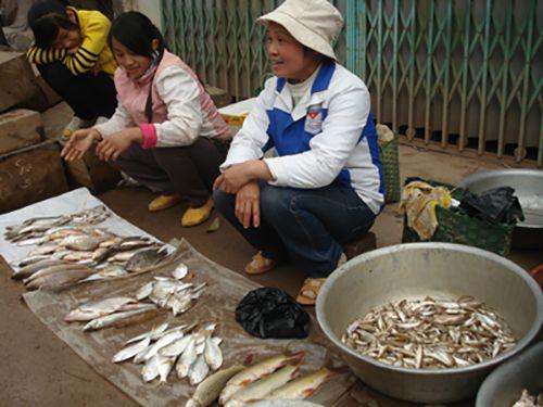 Cách chọn cá mòi tươi ngon